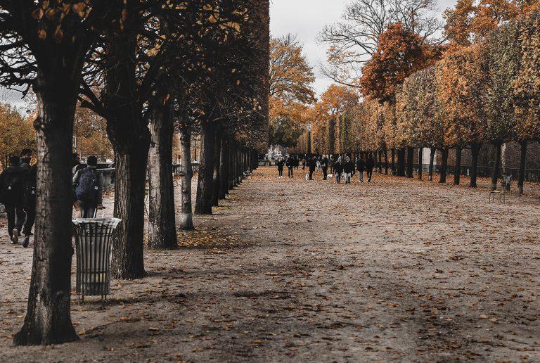 Aufnahme der goldenen Baumwipfel in einem Pariser Stadtpark im Herbst